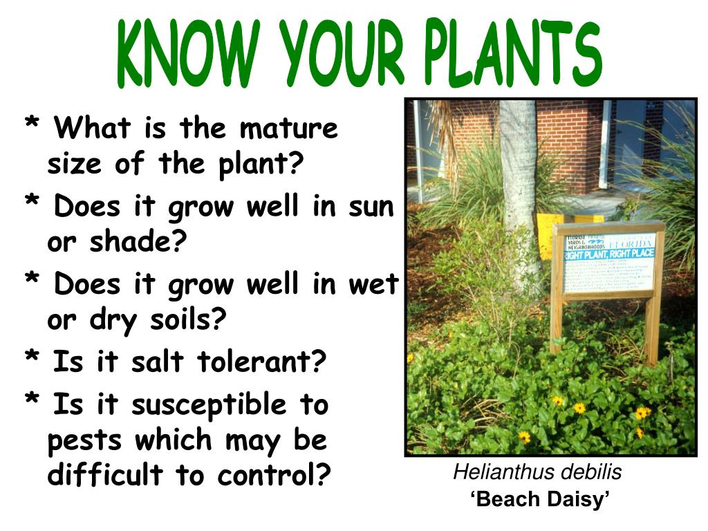 KNOW YOUR PLANTS