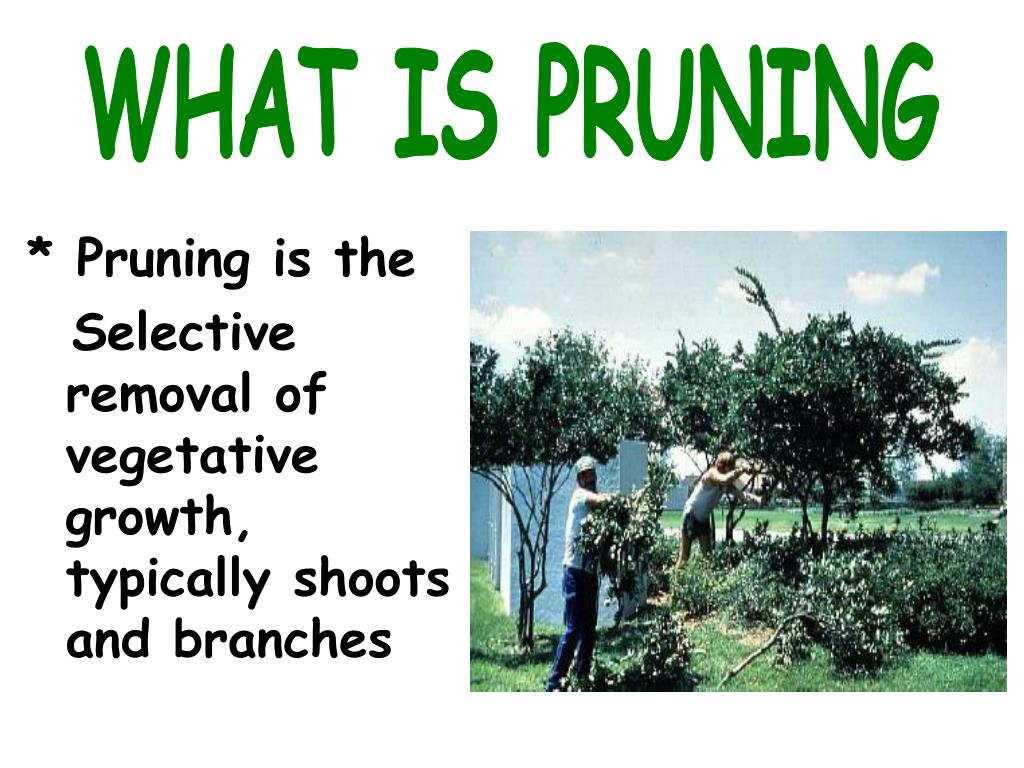 WHAT IS PRUNING