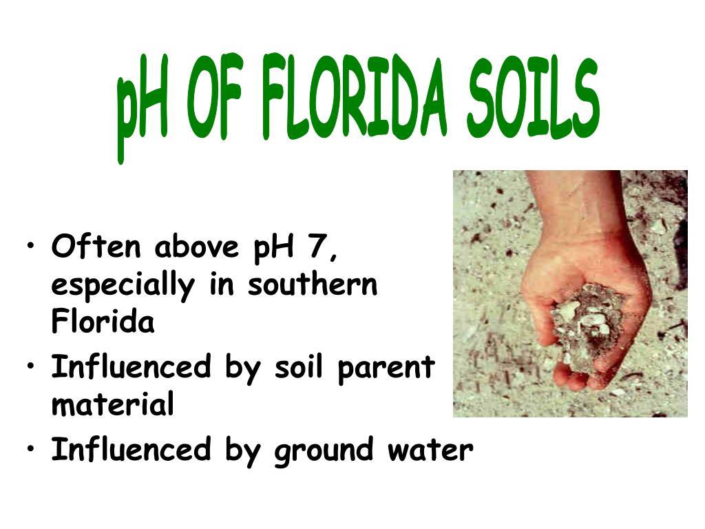 pH OF FLORIDA SOILS