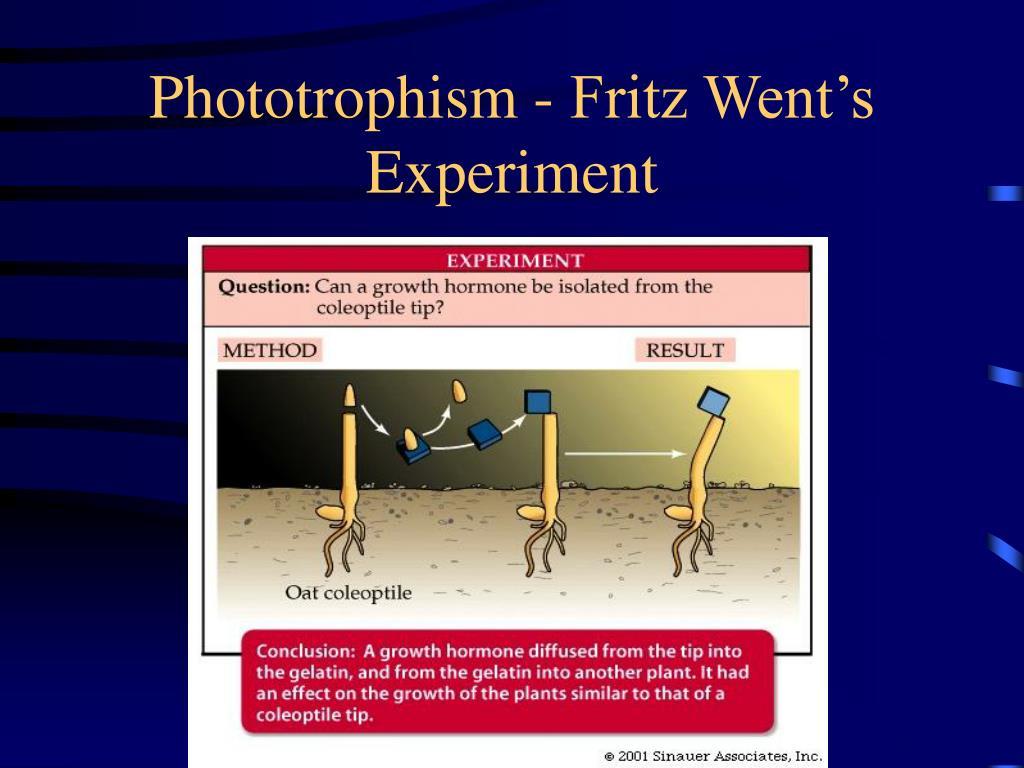 Phototrophism - Fritz Went's Experiment