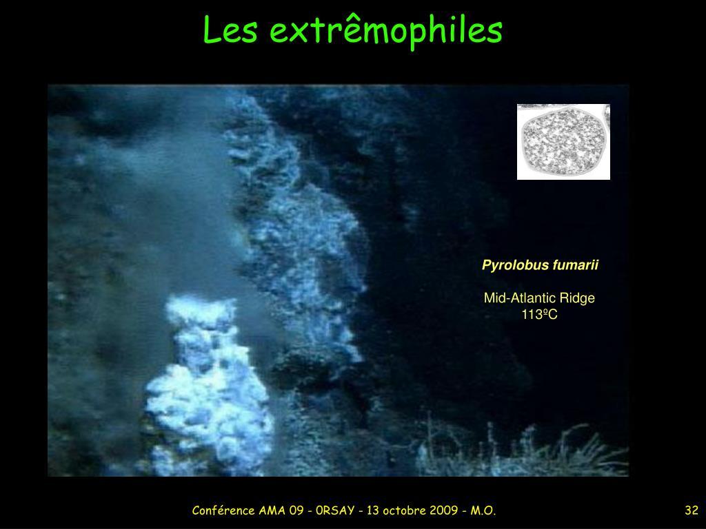 Pyrolobus fumarii