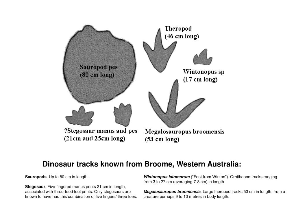Dinosaur tracks known from Broome, Western Australia: