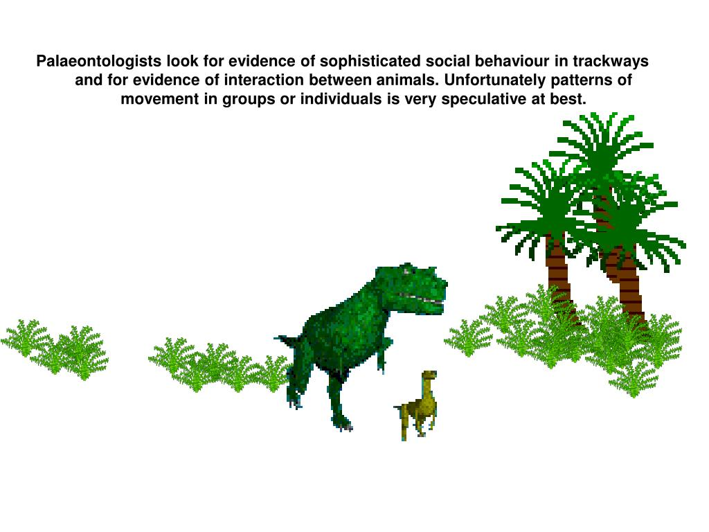 Palaeontologists look for evidence of sophisticated social behaviour in trackways and for evidence of interaction between animals. Unfortunately patterns of movement in groups or individuals is very speculative at best.