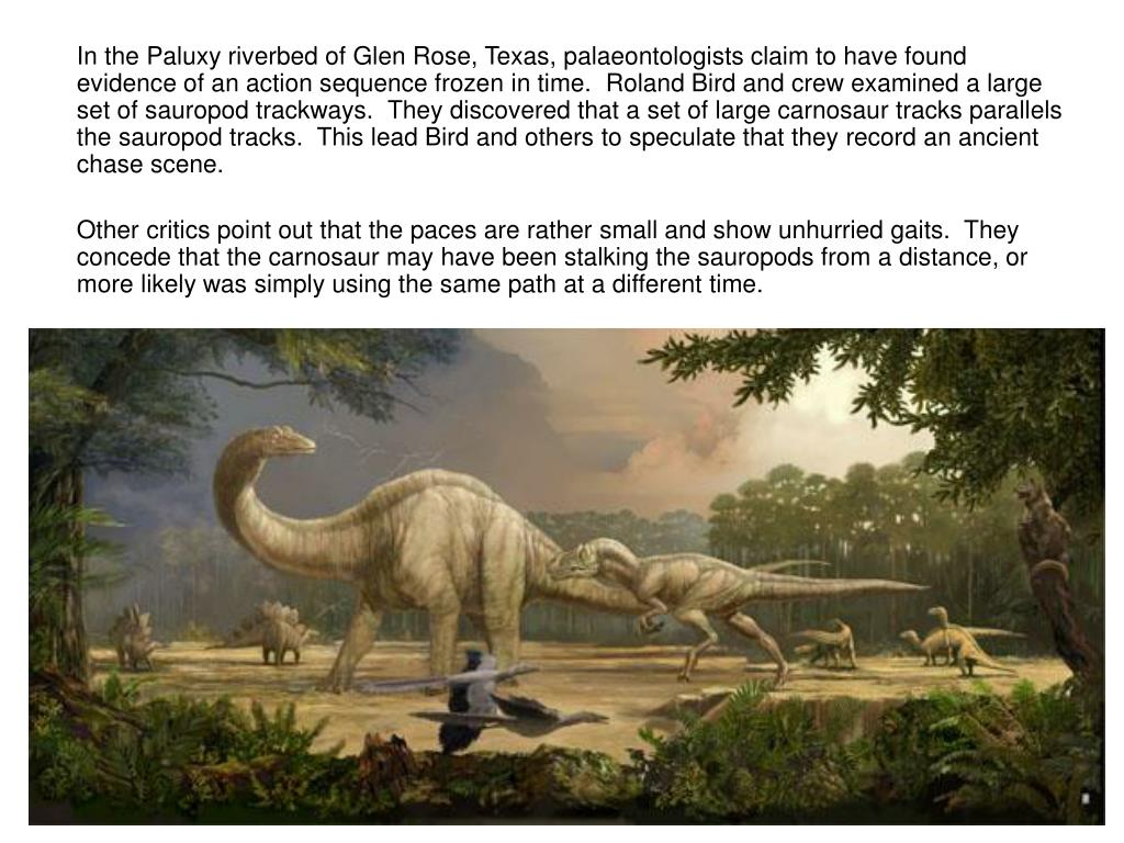 In the Paluxy riverbed of Glen Rose, Texas, palaeontologists claim to have found evidence of an action sequence frozen in time.  Roland Bird and crew examined a large set of sauropod trackways.  They discovered that a set of large carnosaur tracks parallels the sauropod tracks.  This lead Bird and others to speculate that they record an ancient chase scene.