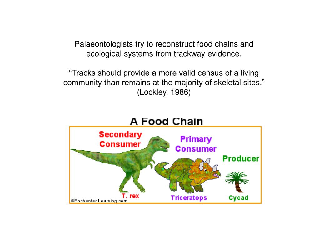Palaeontologists try to reconstruct food chains and ecological systems from trackway evidence.