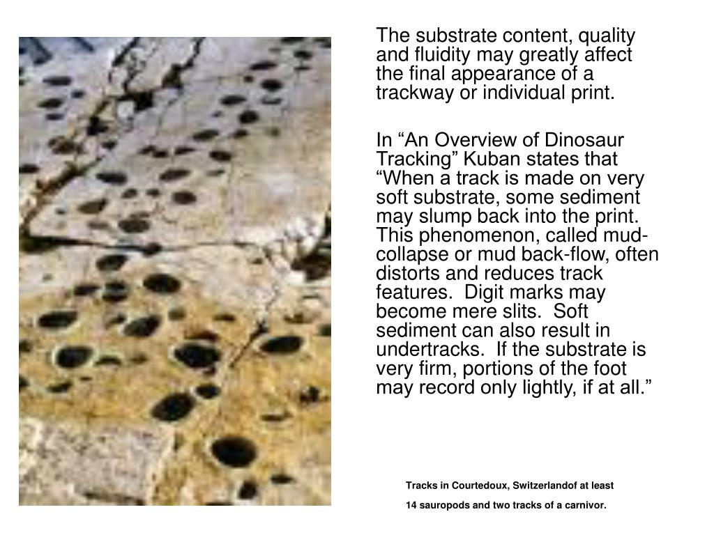 The substrate content, quality and fluidity may greatly affect the final appearance of a trackway or individual print.