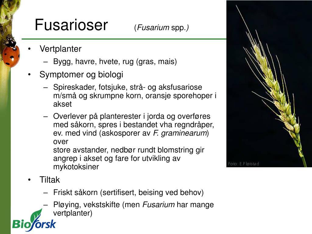 Fusarioser