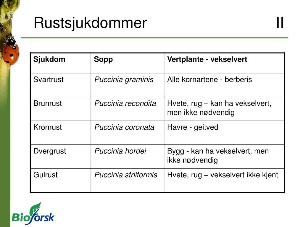Rustsjukdommer II