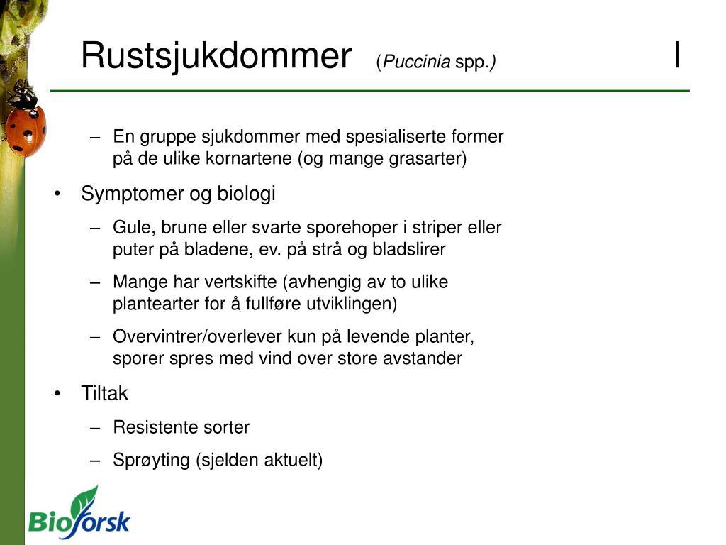 Rustsjukdommer