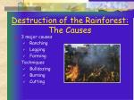 destruction of the rainforest the causes