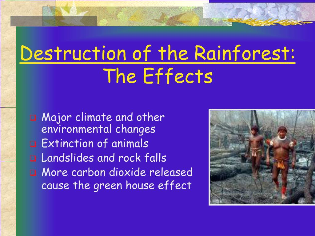 Destruction of the Rainforest:
