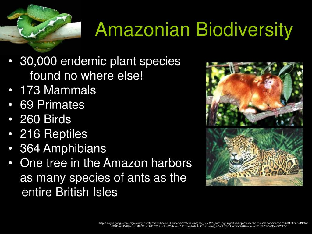Amazonian Biodiversity
