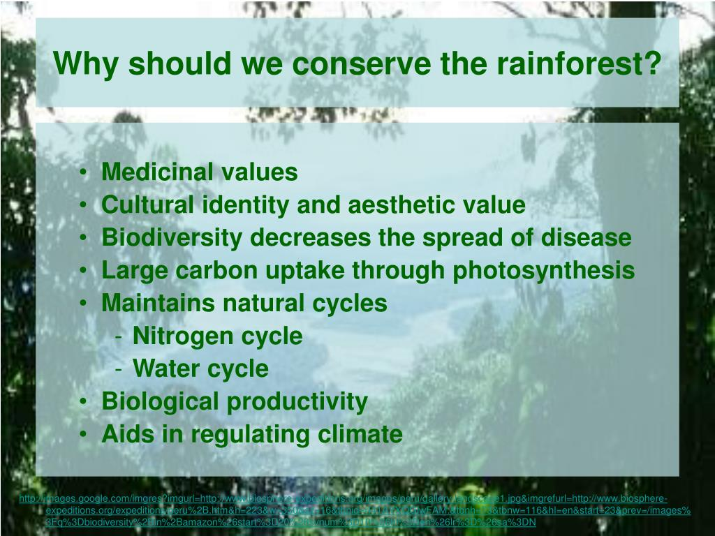 Why should we conserve the rainforest?
