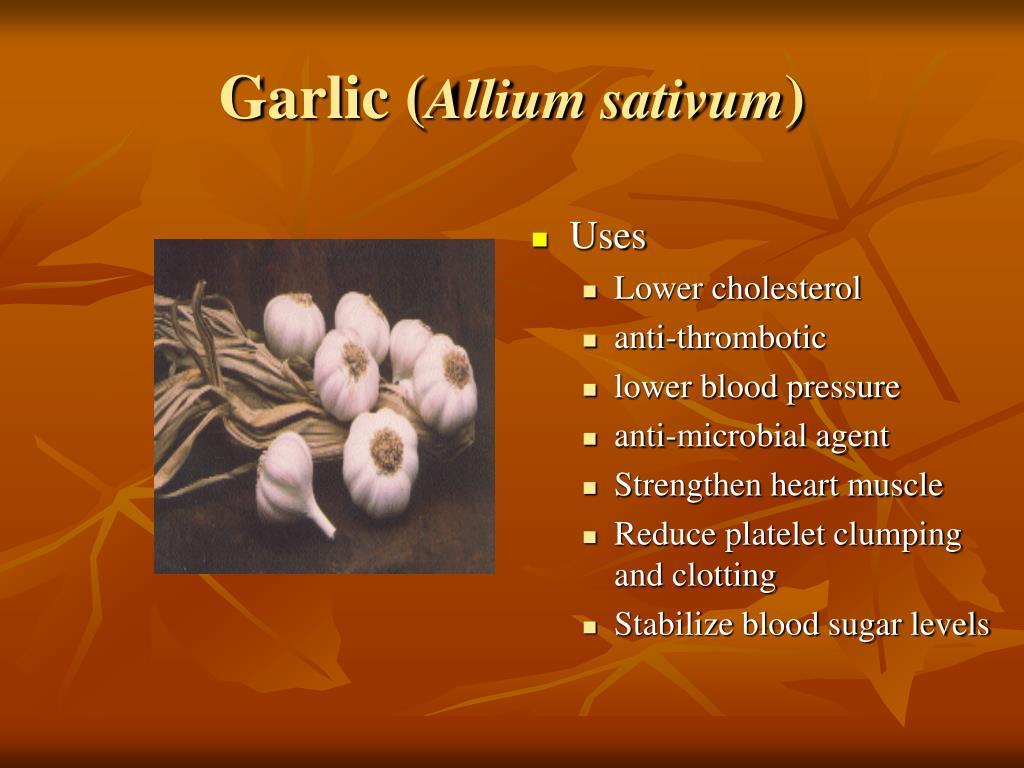 Garlic (