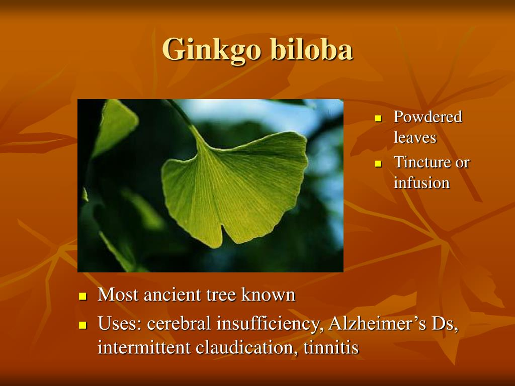 Most ancient tree known