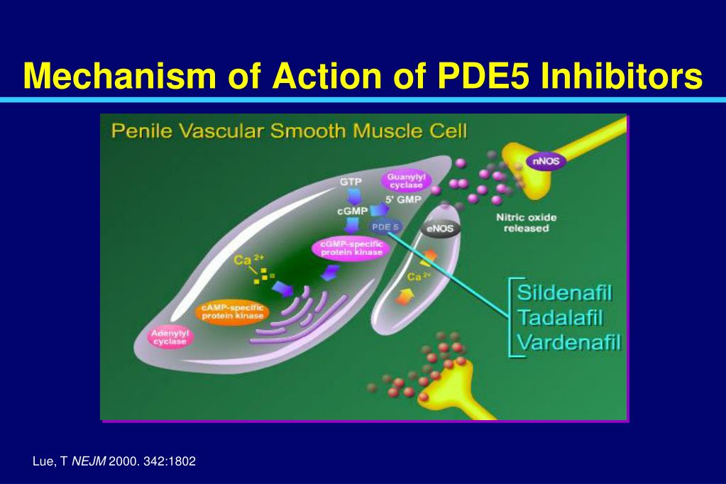 Mechanism of Action of PDE5 Inhibitors