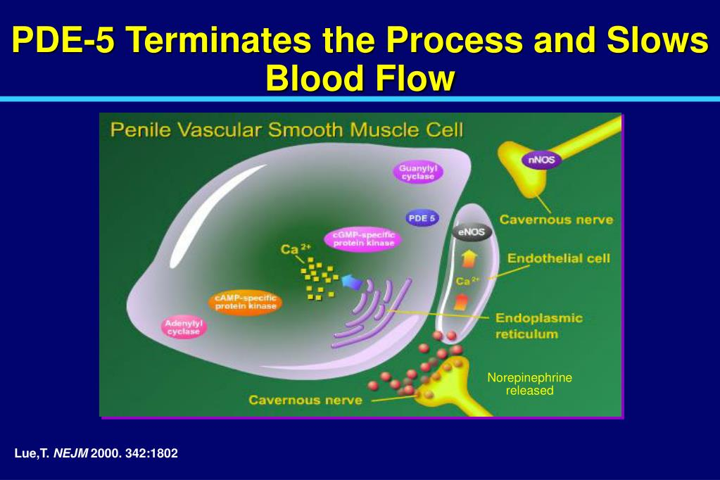 PDE-5 Terminates the Process and Slows Blood Flow