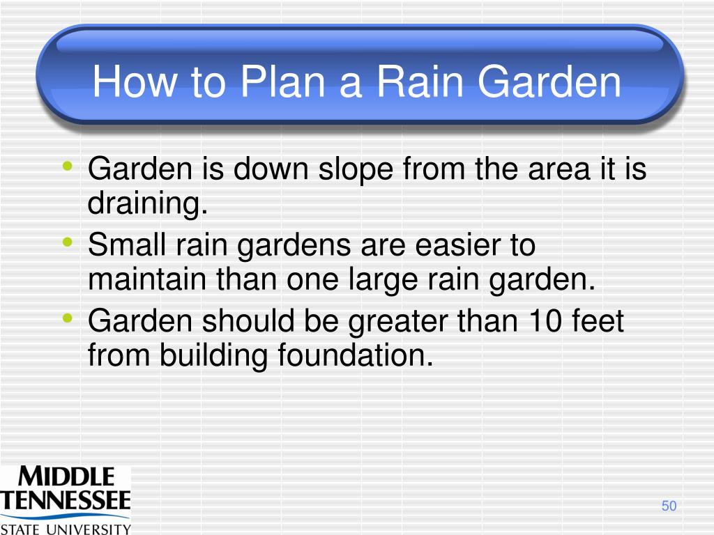 How to Plan a Rain Garden
