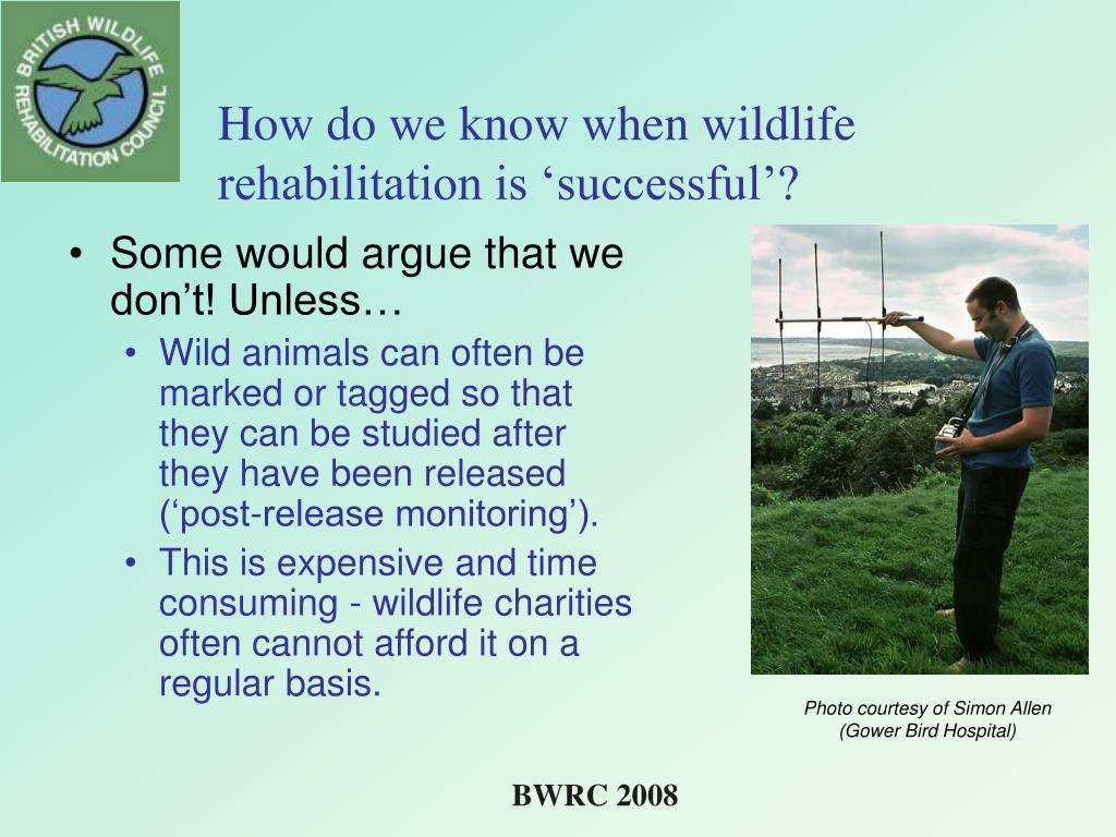 How do we know when wildlife rehabilitation is 'successful'?