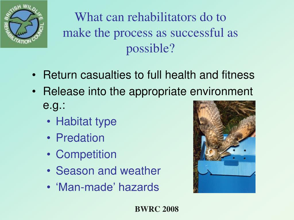 What can rehabilitators do to make the process as successful as possible?
