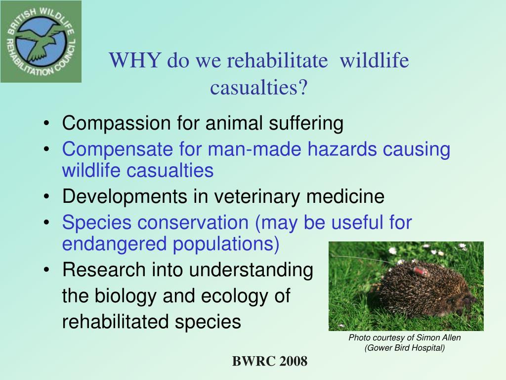 WHY do we rehabilitate  wildlife casualties?