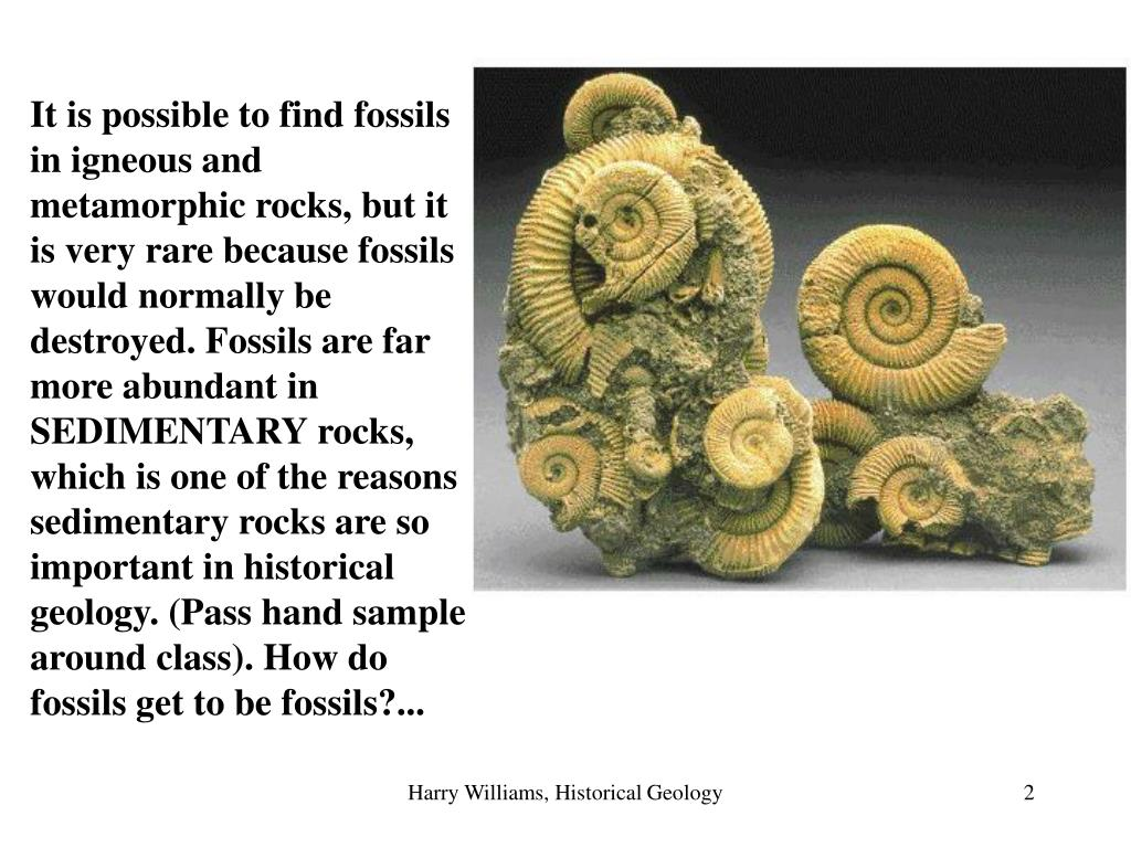 It is possible to find fossils in igneous and metamorphic rocks, but it is very rare because fossils would normally be destroyed. Fossils are far more abundant in SEDIMENTARY rocks, which is one of the reasons sedimentary rocks are so important in historical geology. (Pass hand sample around class). How do fossils get to be fossils?...