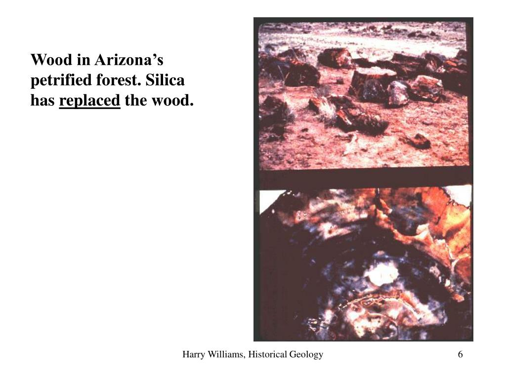 Wood in Arizona's petrified forest. Silica has