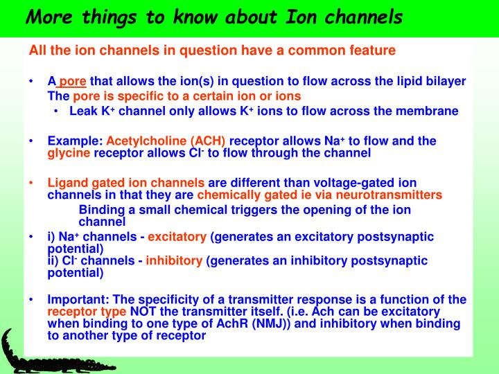 More things to know about ion channels