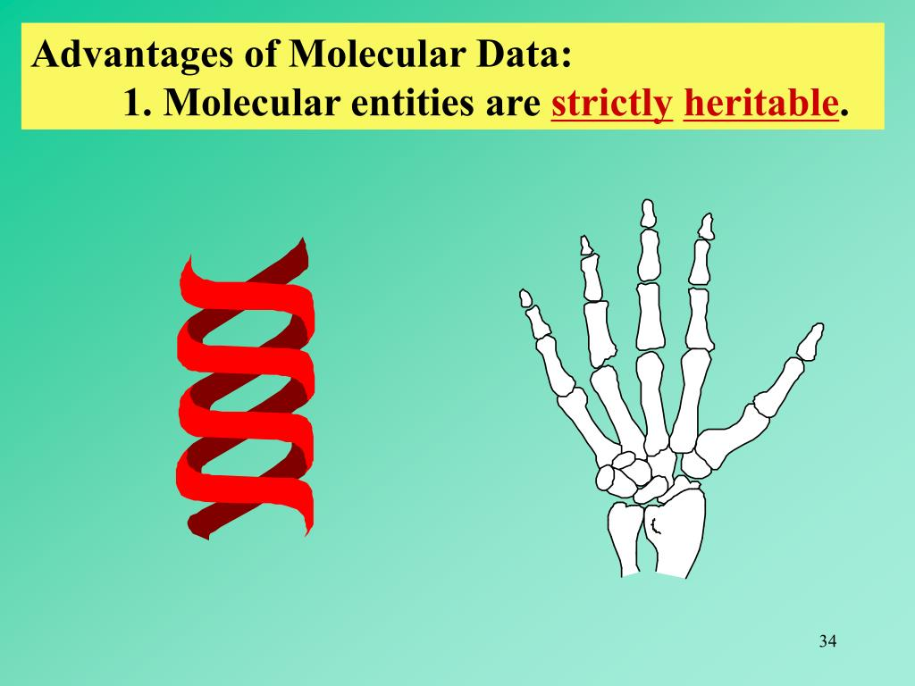 Advantages of Molecular Data: