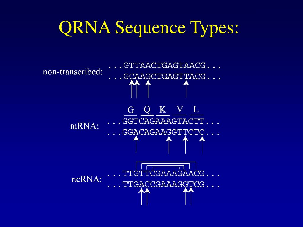 QRNA Sequence Types: