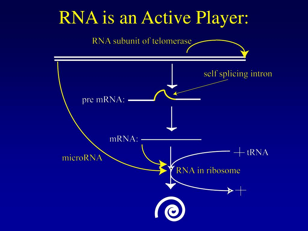 RNA is an Active Player: