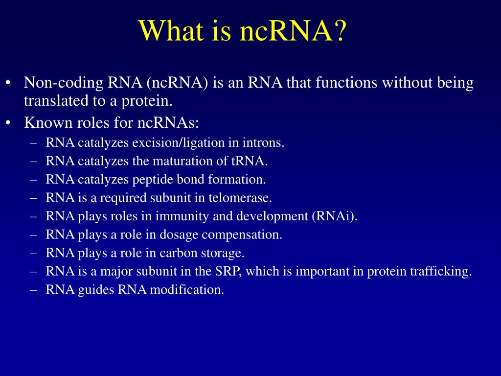 What is ncRNA?