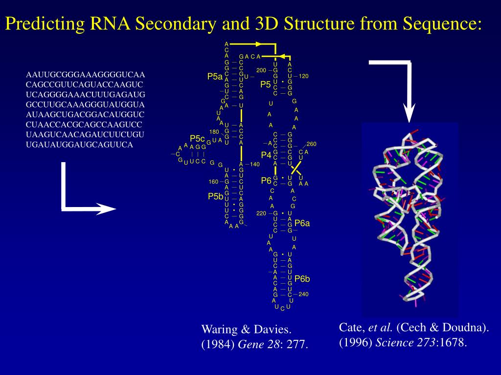 Predicting RNA Secondary and 3D Structure from Sequence: