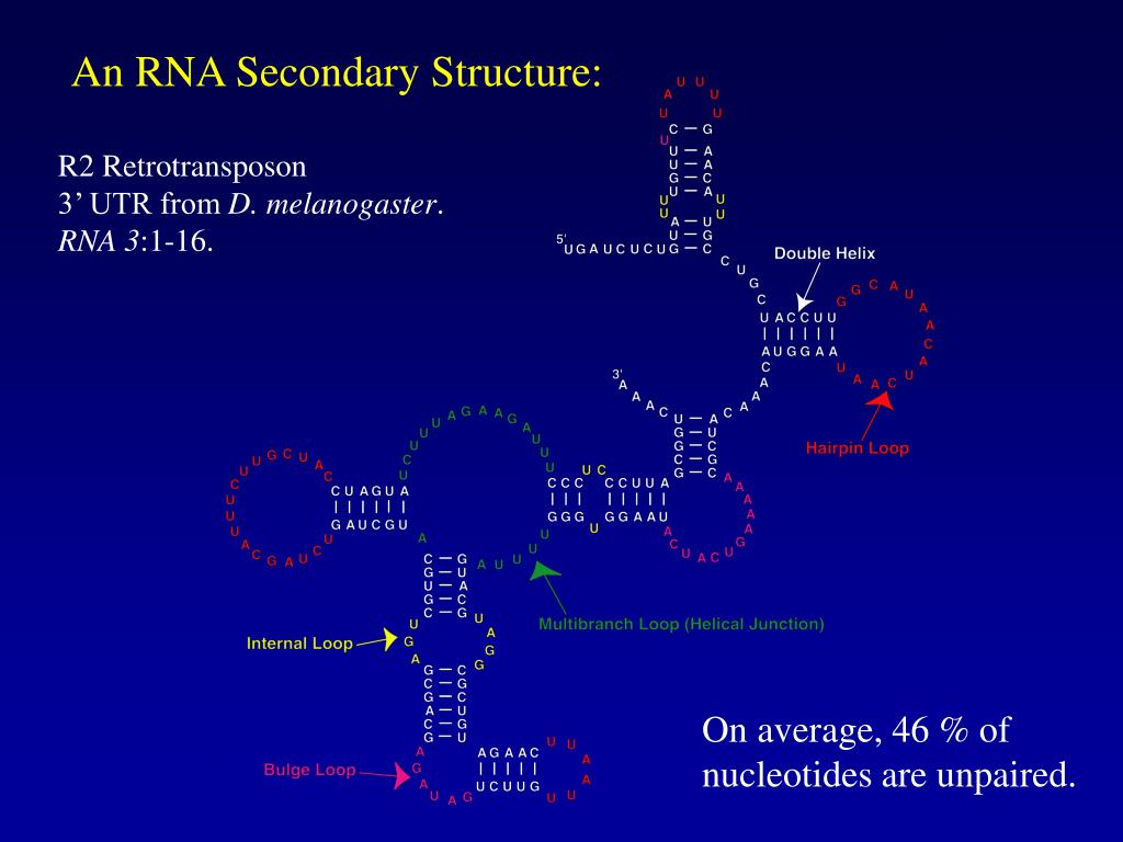 An RNA Secondary Structure: