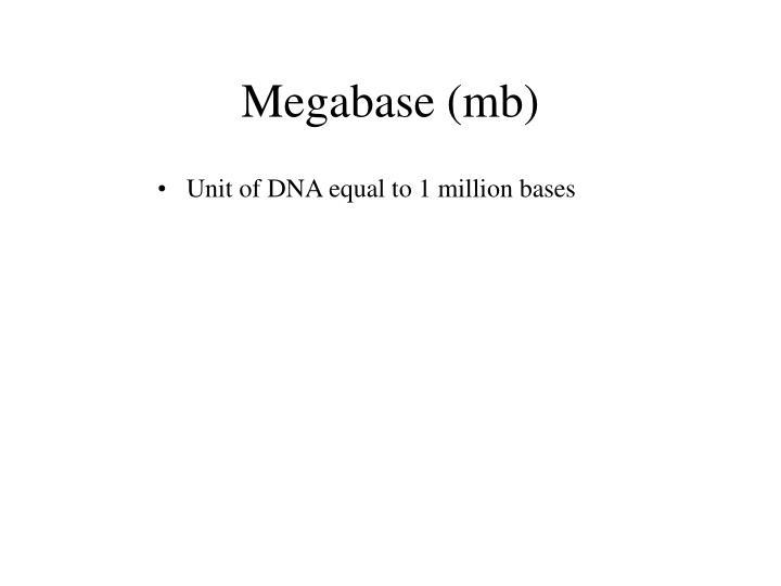 Megabase (mb)