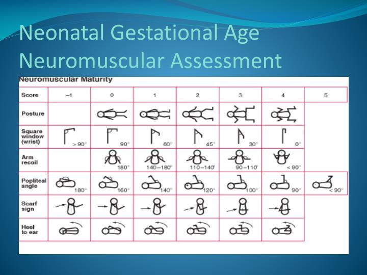 Neonatal Gestational Age  Neuromuscular Assessment