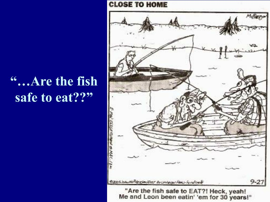"""…Are the fish safe to eat??"""