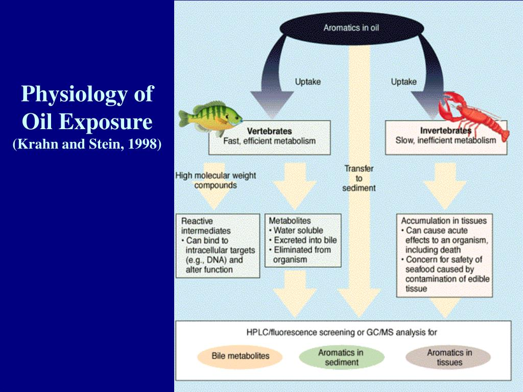 Physiology of Oil Exposure