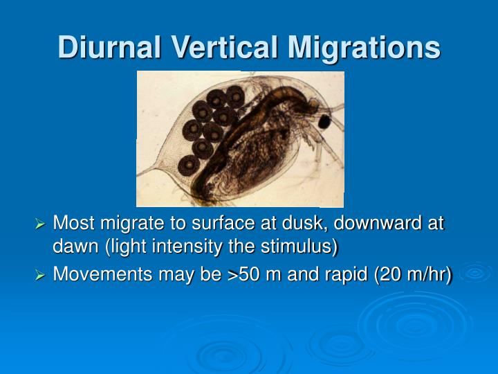 Diurnal Vertical Migrations