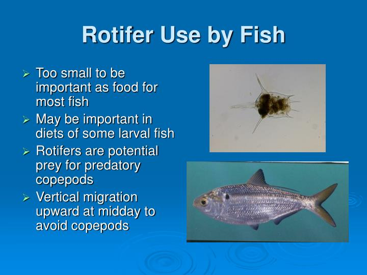 Rotifer Use by Fish