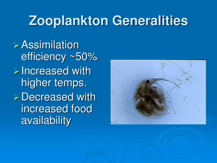 Zooplankton Generalities