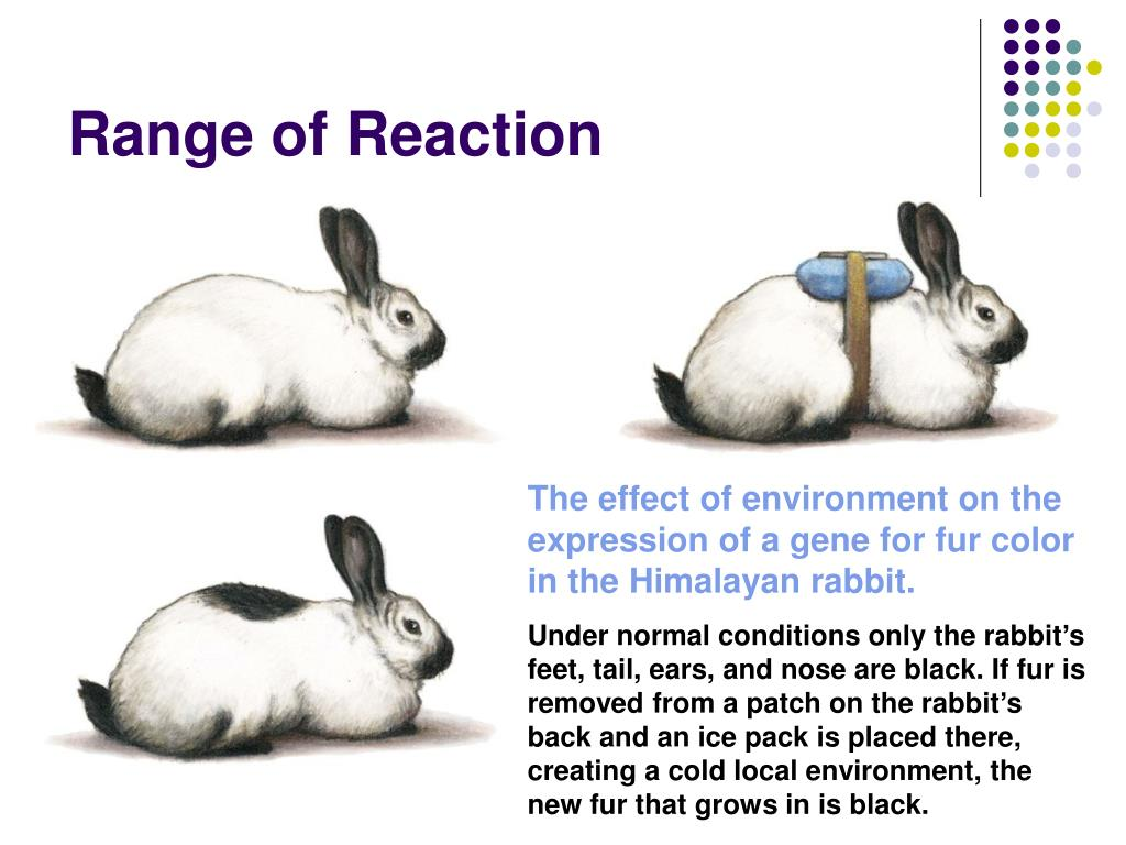 Range of Reaction