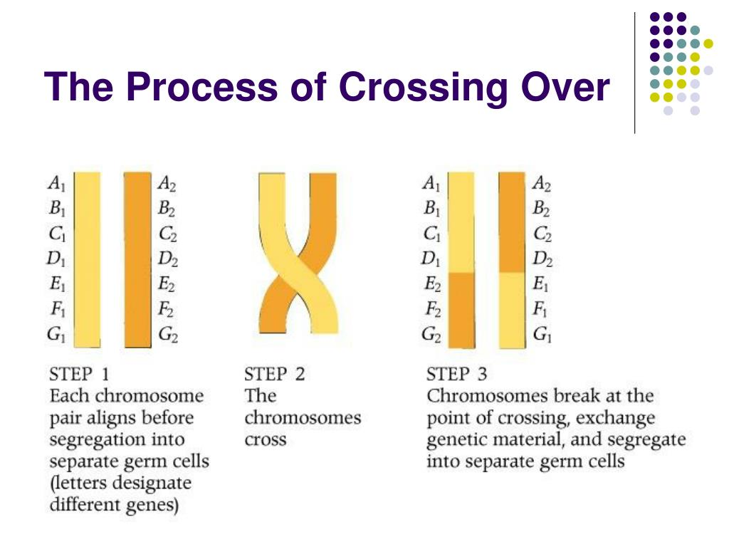 The Process of Crossing Over
