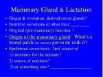 mammary gland lactation