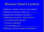 mammary gland lactation1