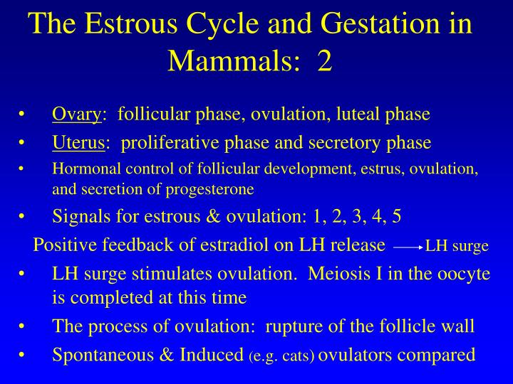 The Estrous Cycle and Gestation in Mammals:  2