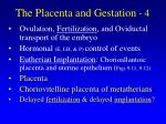 the placenta and gestation 4