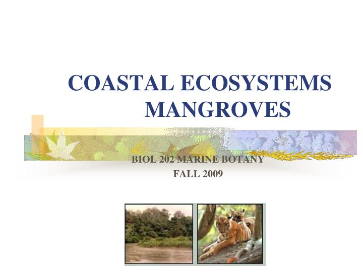 Coastal ecosystems mangroves l.jpg
