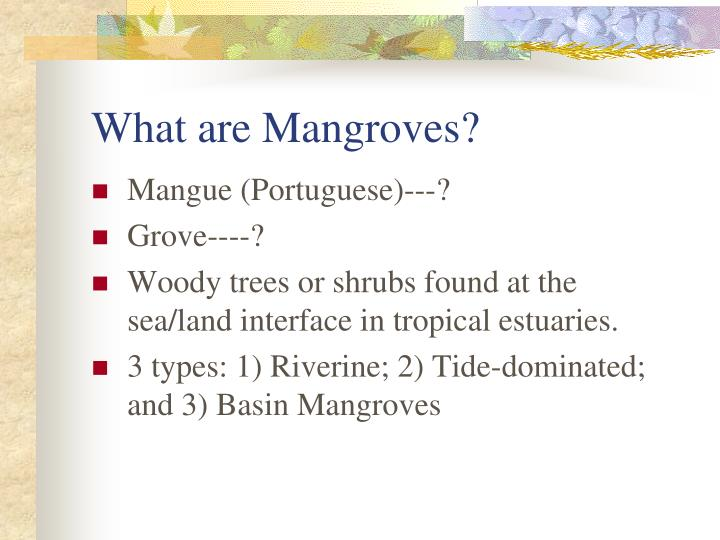 What are mangroves l.jpg