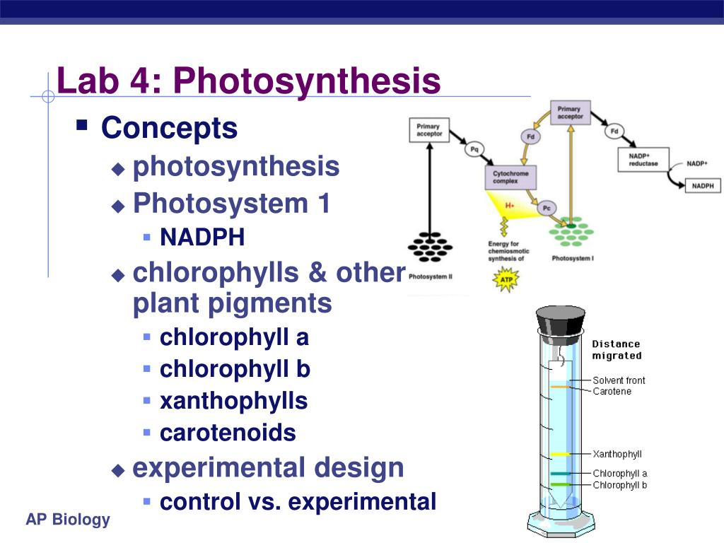 essay on photosynthesis and respiration Photosynthesis and respiration by:ramiro garcia through many years of school and history we have thought of photosynthesis as two opposite things, but they.